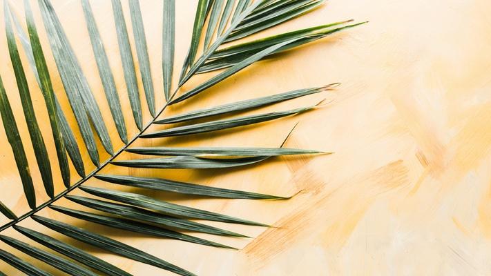Palmzondag tot Stille Zaterdag: wat gebeurde de week voor Pasen?